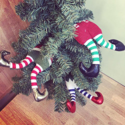 Image of Elf Legs Decorations in Christmas Tree